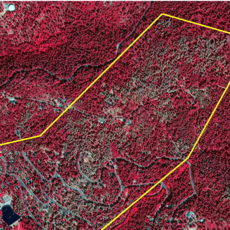 Representative area of significant tree mortality, Calaveras County, CA
